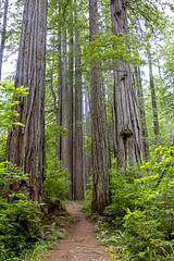 Pathway into the Redwoods (BDFri2012) Tags: redwoodnationalandstateparks redwoodnationalpark prairiecreekredwoodsstatepark redwoods redwoodhighway trail trees pathway nationalpark californiaredwoods californiastatepark northerncalifornia pacificnorthwest landscape outdoors outside ferns