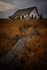 Would You Be Young Again? (Chris Lakoduk) Tags: abandoned home homestead derelict life death photography color fallen tree house landscape reeds brush sky nikon