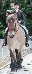 Wemmel, Jaarmarkt 2017 #66 (foto_morgana) Tags: belgique belgium belgiã« dressage headshot horse horserider jaarmarkt2017 mammalia mammals mammifã¨res nature outdoor sã¤ugetiere wemmel zoogdieren animal
