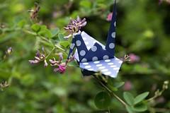 Paper Crane and Lespedeza bicolor (Ichigo Miyama) Tags: ツルとヤマハギ papercrane lespedezabicolor origami おりがみ ツル 折り紙 折り鶴 paper ヤマハギ flower おりがみ写真 origamiphotoorigami 花 origamiphoto