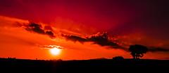 Mañana queda lejos...._XT28701 (Alberto Estella) Tags: nube pino libre aire mirador paisaje tripode color temperatura arbol rojo cielo nocturna exposicion larga star árbol planta hierba aestella estella mar azul costa brava torres agua arena sedosa roca nubes formación rocosa puesta sol fujifilm xt2 bosque senda de campo