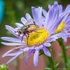 Détail (musette thierry) Tags: d600 musette thierry détail capture annimal 90mm28 nikon fleur jaune