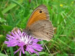 Butterfly 1450 (+780000 views!) Tags: butterfly borboleta farfalla mariposa papillon schmetterling فراشة