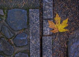 Courtyard Japanese Garden 3260 A