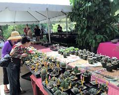 009 Cacti For Sale (saschmitz_earthlink_net) Tags: 2017 california los angeles county arcadia losangelescountyarboretumandbotanicgarden cssa cactusandsucculentsocietyofamerica cactus show sale