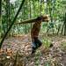 Getting bamboo