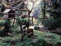 1994_Singapore_2016-07-18_Photo_180 (Matthias & Paula) Tags: singapore sentosa kuala lumpur malaysia cameron highlands zoo japanese gardens