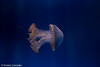 IMG_0716 (10Rosso) Tags: acqua acquario genova pesci pesce mare acquariodigenova aquarium genovaacquarium