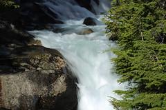 Mount Rainier (Symbiosis) Tags: mtrainier mtrainiernationalpark hike hiking familyvacation hammock forest woods snowcappedmountain