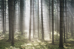 summer entertainment (Karin Ziegler) Tags: nebel landscape nature fog forest sunlight woods woodland sunbeams rays morning nikon d810 styria austria 50mm