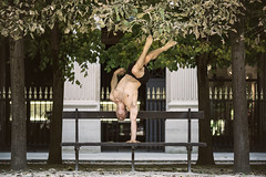 (dimitryroulland) Tags: nikon d600 dimitryroulland handstand balance natural light performer art sport paris city france hands gym gymnast gymnastics circus artist yoga