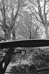 (frscspd) Tags: 04590017 20170217 pentax pentaxmx mx takumar takumar58mm 58mm ilford ilfordxp2 ilfordxp2400bw xp2 filmgrain film blackandwhite monochrome cambridge sidgwickavenue car reflections reflection tree planetree plane londonplane antenna windscreen