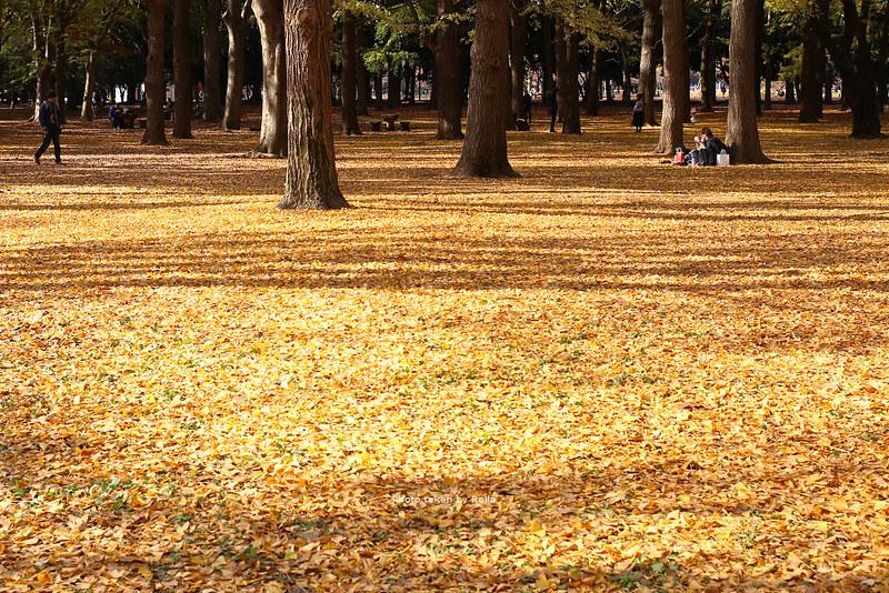 東京,說走就走的秋日小旅行