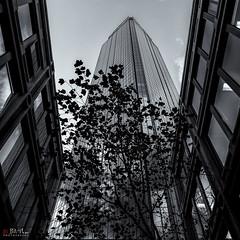Melbourne (Black and White) (Bill Thoo) Tags: melbourne victoria australia street architecture building skyscraper tree travel urban city silhouette monochrome bow blackandwhite up sky sony a7rii ilce7rm2 zeiss batis 18mm