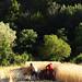 Che ne sai tu di un campo di grano n.4