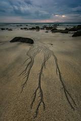 Roots (eriknst) Tags: lofoten beach sunset midnight norway norwegen norvege north summer calm nature detail rocks seascape landscape ocean green purple blue clouds svolvær gimsøya sand water