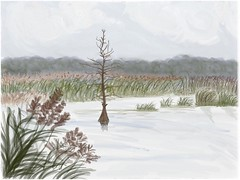 Carolina Rice Field (Solly Avenue) Tags: marshes travel watercolor impressionism coastal ipadpainting waterscape