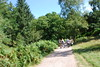 2017-08-28 cannock chase 011 (sonya.britton) Tags: cannockchase staffordshire ancientforest wood forest walk family tree jude faith girlfriend cara andrew