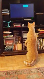 Hunter of the screen saver
