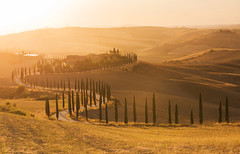 Tuscany Gold (Tracey Whitefoot) Tags: tracey whitefoot 2017 summer tuscany toscana italy italian agriturismo baccoleno sunset dusk cypress trees asciano eu europe gold golden light line row tree warm tone tones val rural farmland farming landscape dorcia travel famous icon iconic