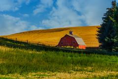 Red Palouse Barn-Spokane (Thaiexpat) Tags: 2017 america spokane palouse barn red colors scenic peaceful colorful goldenhour