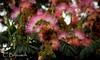 _MG_7245 (Cintia Billmaier.) Tags: acacia baum bäumen acaciadeconstantinopla áboldejúpiter natur naturaleza árbolesdetorrelavega color farben flor flores blume blumen