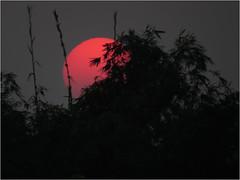 The raw sunset (Sadot Arefin) Tags: subset sun sundown silouette bangladesh burningsky sunet colorfulsunset purplesky skyonfire dinajpur parbotipur kholahati awardflickrbest flickrunitedaward