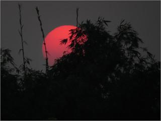 The raw sunset