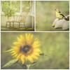 Summer time in Maine (jm atkinson) Tags: collage summer goldfinch jaijohnsontexture texturetuesday maine sunflower frontporch