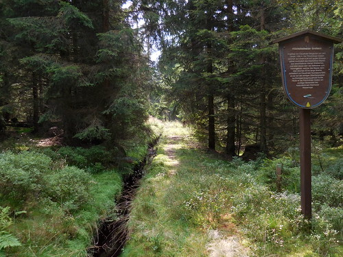 Old artificial drainage canal, Harz National Park