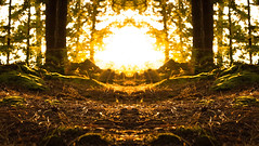 Golden Sun (Photigrapher) Tags: golden sun hour sunset landscape trippy abstract symmetry symmetrical new hampshire england moss pine needles evergreen forest nature nikon d3200 hiking outdoors sunrise beautiful ancient old growth life