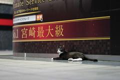 猫 (fumi*23) Tags: ilce7m2 sony 85mm fe85mmf18 sel85f18 katze gato cat animal street japan miyazaki 宮崎 ソニー 路地 街 ねこ 猫 neko emount α7ii α