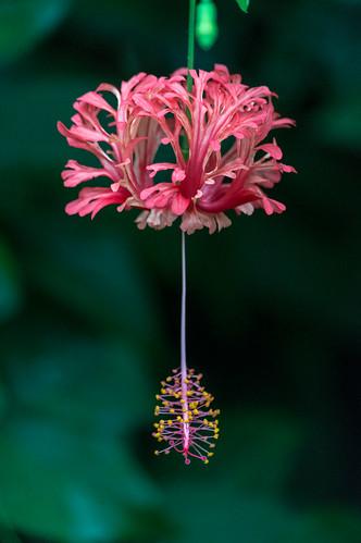 Eden Flower 1