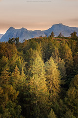 from tarn hows to the langdales (explore) (akh1981) Tags: travel trees manfrotto mountains outdoors walking landscape lakedistrict tamron nikon sunrise cumbria uk