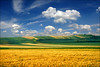 Sunny spring (Katarina 2353) Tags: landscape vojvodina fields serbia katarina2353 katarinastefanovic