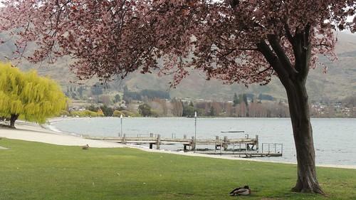Wanaka lake-front