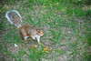 DSC_4418-2 (Luiz A Negreiros) Tags: ferias2008 livro2008 newyork usa esquilo