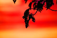 The End of a Hot Summer (Rolf-Schweizer) Tags: summer autumn artphotography art appenzell artist appenzellerland auffrischen appenzellertourismus rolfschweizer rolfschweizerfotografie rolfschweizerphotography thechurchofjesuschristoflatterdaysaints kirchejesuchristiderheiligenderletztentage keystone kunst macro abend explore evening europe fotografie flickr farben frost bauer bauernverband feuerwehr degersheim gettyimage heart hoffeld heaven harmony himmel hope