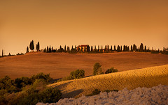 Tuscan Gold (Tracey Whitefoot) Tags: 2017 tracey whitefoot summer tuscany toscana gold golden morning sunrise dawn cypress tree trees valley val dorcia italy italian siena europe eu warm tones icon iconic landscape