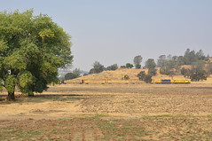 Chinese Camp, CA (CN Southwell) Tags: sierra railway northern rr railroad genset gp20 california