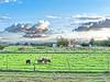IMG_2740_CG12 (errefotos) Tags: rural paisagem paisaje landscape paysage animal ovelhas ovejas sheep mouton moita portugal canong12
