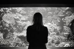 (tmkbnn) Tags: prakticabx20 slr singlelensreflex smallformat 35mm 135 film filmphotography kodak400tx bw blackandwhite berlin aquariumberlin corals coraltank coralreeffish silhouette woman tomek tmkbnn