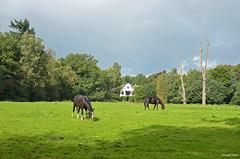 Landscape Oldhorst (JaapCom) Tags: jaapcom landscape horses trees landschaft oldhorst landed natural wezep dutchnetherlands holland