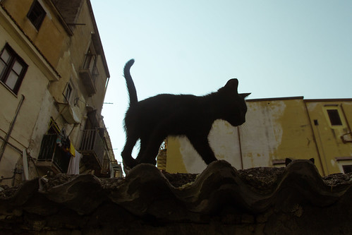 cat231, citizen of Palermo