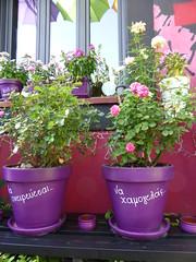 Να ονειρεύεσαι....να χαμογελάς!!  P1030359 (amalia_mar) Tags: flowers flora flowerpot roses 7dwf makemesmile