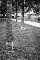 "Baum an Baum...-Tree on Tree-B&W (Siggi-Dee) Tags: ""leica elmar 50mm f28 35mm b26w blackandwhite color digital film japan kodak leica leicam6 leicam9 leicamp m9 tokyo voigtlander street rangefinder leicam5 wetzlar solms"