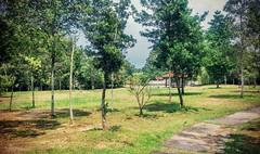 https://foursquare.com/v/paya-indah-wetlands/4cddf128df986ea8f3ddd816 #travel #holiday #travelMalaysia #holidayMalaysia #Malaysia #garden #green #旅行 #度假 #马来西亚度假 #马来西亚旅行 #马来西亚 #Asia #亚洲 #公园 #绿色 #grass #tree #草 #树 #Resort #度假村 #大自然 #nature