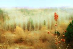 Late autumn colors (s_gulfidan) Tags: autumn trees abstract saariysqualitypictures platinumheartaward art painting 300faves