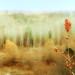 Late+autumn+colors