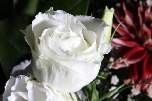 20170919 011 Baarlo Macro bloem